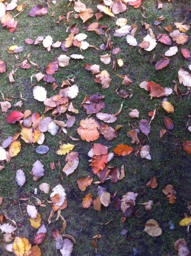 Natures Autumn Carpet